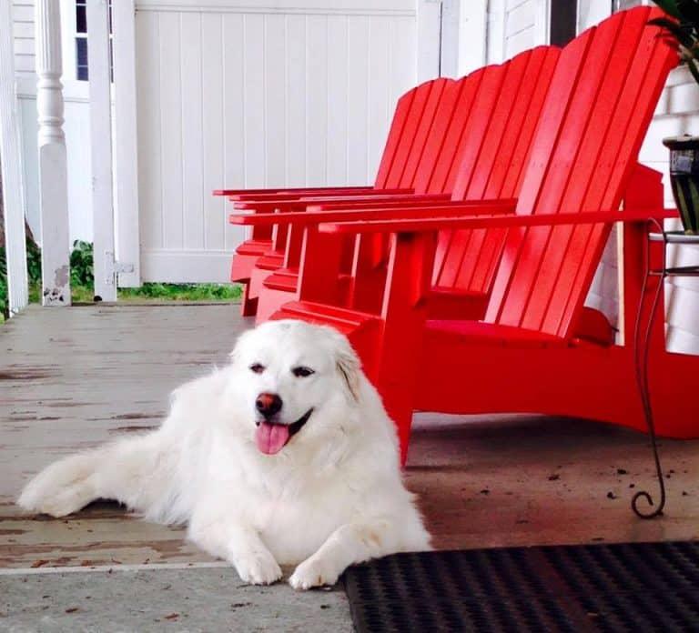 Sea Dog Adirondack