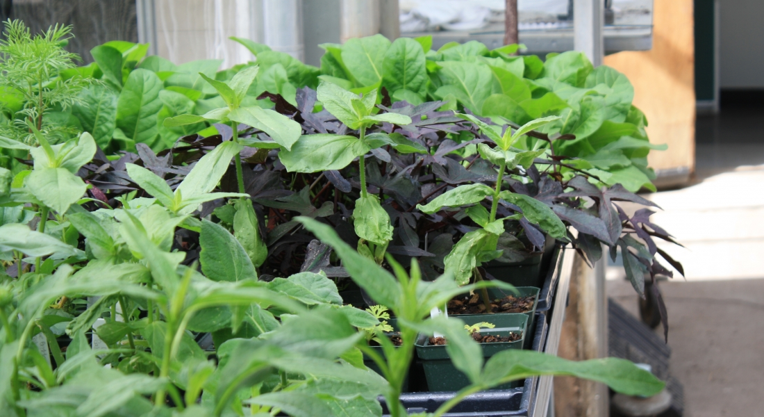 Frerichs Farm is family owned and operated retail nursery and farm